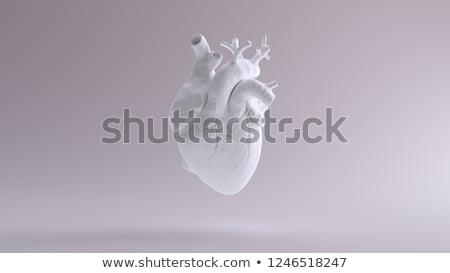 Human heart detailed anatomy, colorful design Stock photo © Tefi