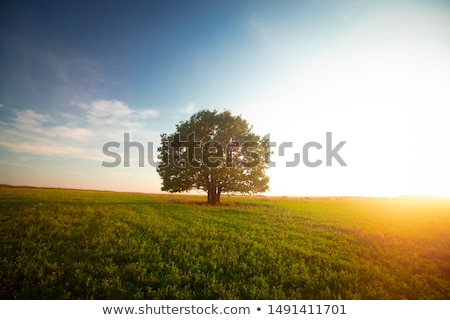 孤独 ツリー 冬 草原 雪 白 ストックフォト © karin59