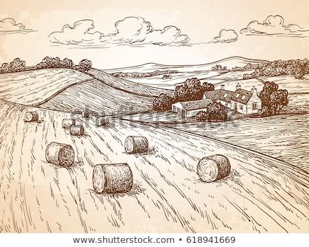 Rolls of hay, haystack bales in countryside landscape Stock photo © stevanovicigor