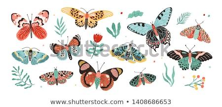 Különböző rovarok illusztráció pillangó természet háttér Stock fotó © bluering