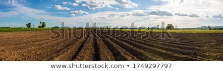 bahar · alan · hazırlık · çiftçi · traktör · çalışma - stok fotoğraf © dcwcreations