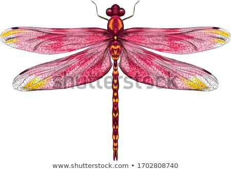 Libélula amarelo asas ilustração feliz arte Foto stock © bluering