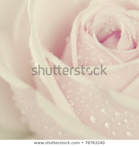Beatiful spring flowers in soft light. Stock photo © lithian