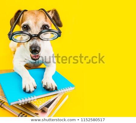 kutya · tanár · kifestőkönyv · illusztráció · fekete · vicces - stock fotó © orensila