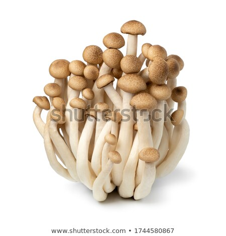 A cluster of white mushrooms Stock photo © IS2