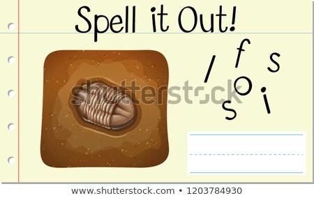 Varázsige ki kövület illusztráció gyermek háttér Stock fotó © bluering