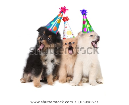 dogs howling for birthday stock photo © cynoclub