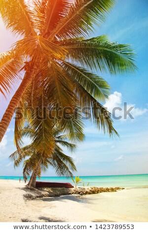 Kókuszpálma fatörzs türkiz tengerpart tengerparti homok víz Stock fotó © lunamarina