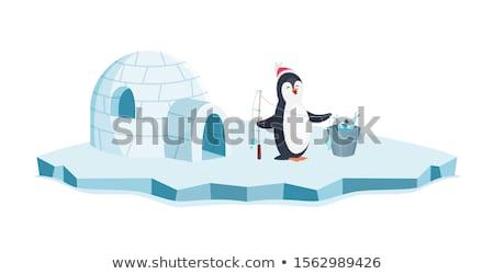 Pingouin igloo illustration poissons glace oiseau Photo stock © adrenalina