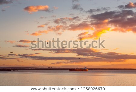 Cargo ships in Botany Bay at sunset Stock photo © lovleah