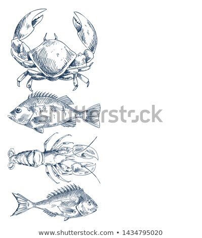 Bass or Bream Marine Creature Hand Drawn Poster Stock photo © robuart