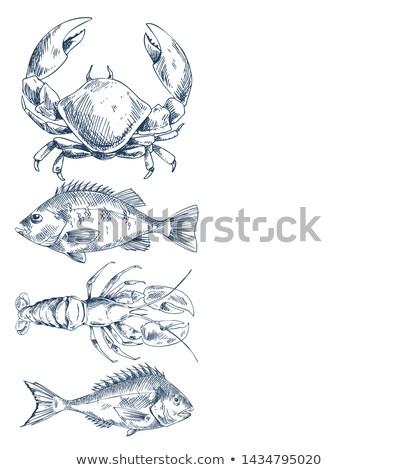 低音 海洋 手描き ポスター シーフード ストックフォト © robuart