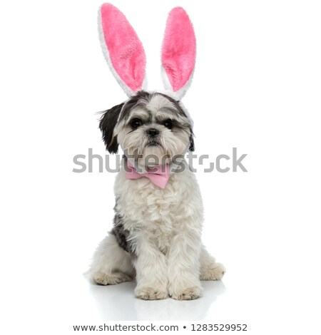 stylish shih tzu with pink rabbit ears headband sitting Stock photo © feedough
