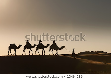 egyptian camel in evening stock photo © givaga