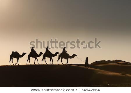 Egípcio camelo noite pirâmides quente deserto Foto stock © Givaga