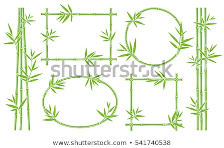 bamboo frame with blank space   green bamboo stems with leaves stock photo © winner