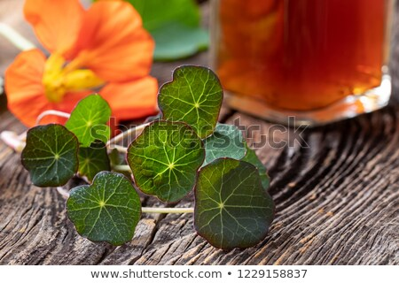 Young nasturtium leaves with a bottle of tincture and a nasturtium Stock photo © madeleine_steinbach