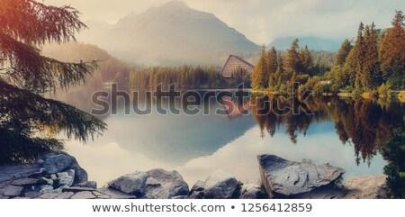 Brumeux paysage ciel arbre herbe Photo stock © konradbak