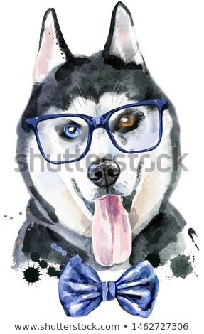 Suluboya portre boğuk gözlük sevimli köpek Stok fotoğraf © Natalia_1947