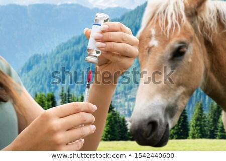 Vrouw paard vaccin man baan Stockfoto © AndreyPopov