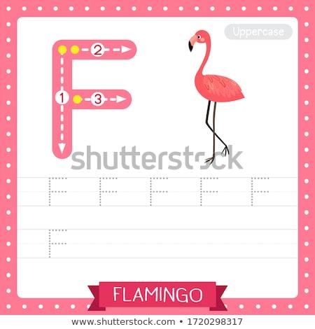 Letra f Cartoon flamenco aves educativo ilustración Foto stock © izakowski
