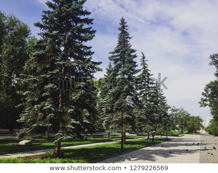 公園 成長 ツリー 森林 夏 ストックフォト © Alex9500