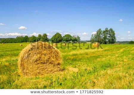 najaar · landschap · berg · dorp · hooiberg - stockfoto © photocreo