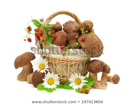 Basket of fresh mushrooms Stock photo © photocreo