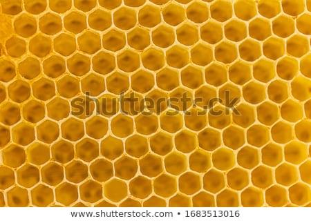 Petek gıda doğa arı model Stok fotoğraf © ozaiachin