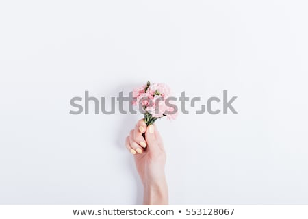 woman and bouquet of a red carnations Stock photo © imarin