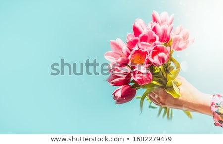 свежие тюльпаны букет цветок древесины зеленый Сток-фото © mobi68