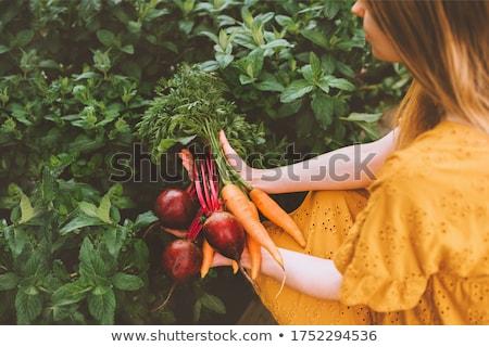 bos · groenten · tomaten · sla · peper · Rood - stockfoto © vaeenma