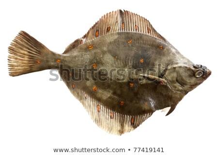ヨーロッパの 自然 環境 水 眼 魚 ストックフォト © Arrxxx
