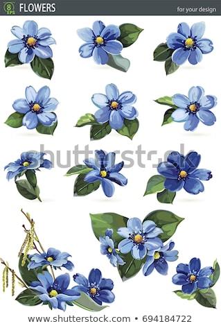 Virágok kék közelkép virág erdő háttér Stock fotó © tainasohlman