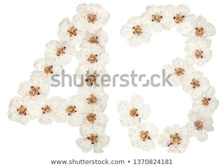 armut · ağaç · beyaz · çiçekler · çiçek · yeşil · bahar - stok fotoğraf © lianem