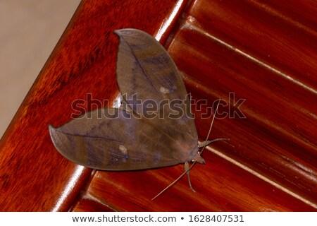 Brown Moth on a Plant stock photo © rhamm