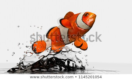 Clownfish in an aquarium Stock photo © bmonteny