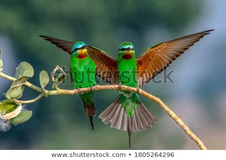 蜻蜓 支 性質 動物 翼 商業照片 © konturvid