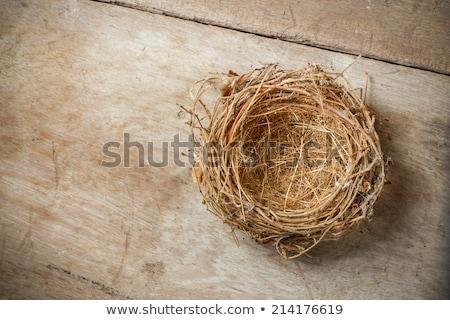 Stockfoto: Lege · nest · geïsoleerd · witte · Pasen · home