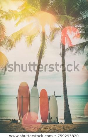 hojas · de · palma · vintage · estilo · retro · primer · plano · sombra · primavera - foto stock © mikko