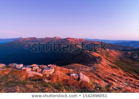 Sommer Landschaft Gras Holz Schönheit Berg Stock foto © OleksandrO