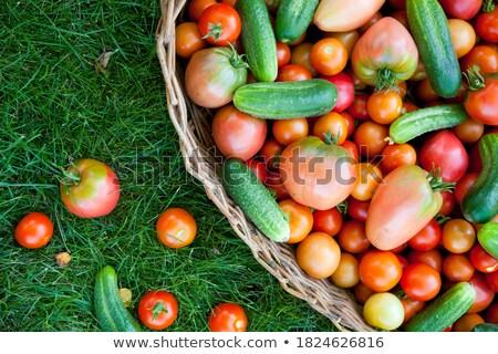 Salatalık iki taze çift eldiven yeşil Stok fotoğraf © smartin69