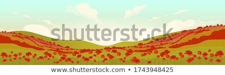 Virágok domboldal nyár tájkép virágzó szépség Stock fotó © Kotenko