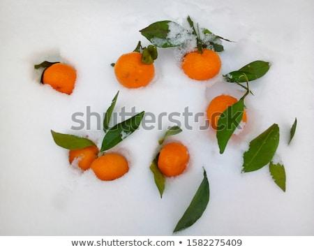 Ripe tangerines in snow Stock photo © mady70