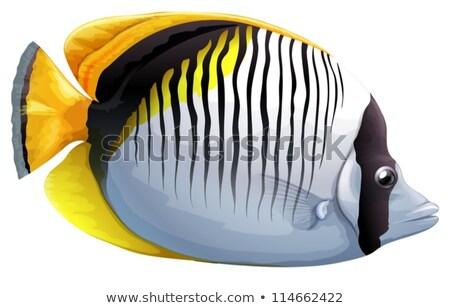 Spot-nape butterflyfish Stock photo © bluering
