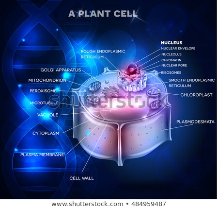 Plant Cell structure and DNA chain Stock photo © Tefi