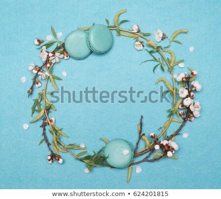 кадр филиала ива дерево бирюзовый декоративный Сток-фото © Kotenko