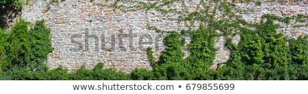 古い 壁 ツタ 秋 風光明媚な パノラマ ストックフォト © tracer