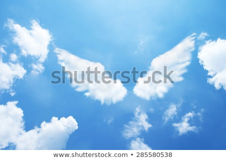 Lány angyalszárnyak arc angyal portré adatbázis Stock fotó © IS2