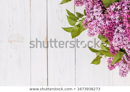 Lilac on wooden background Stock photo © kostins